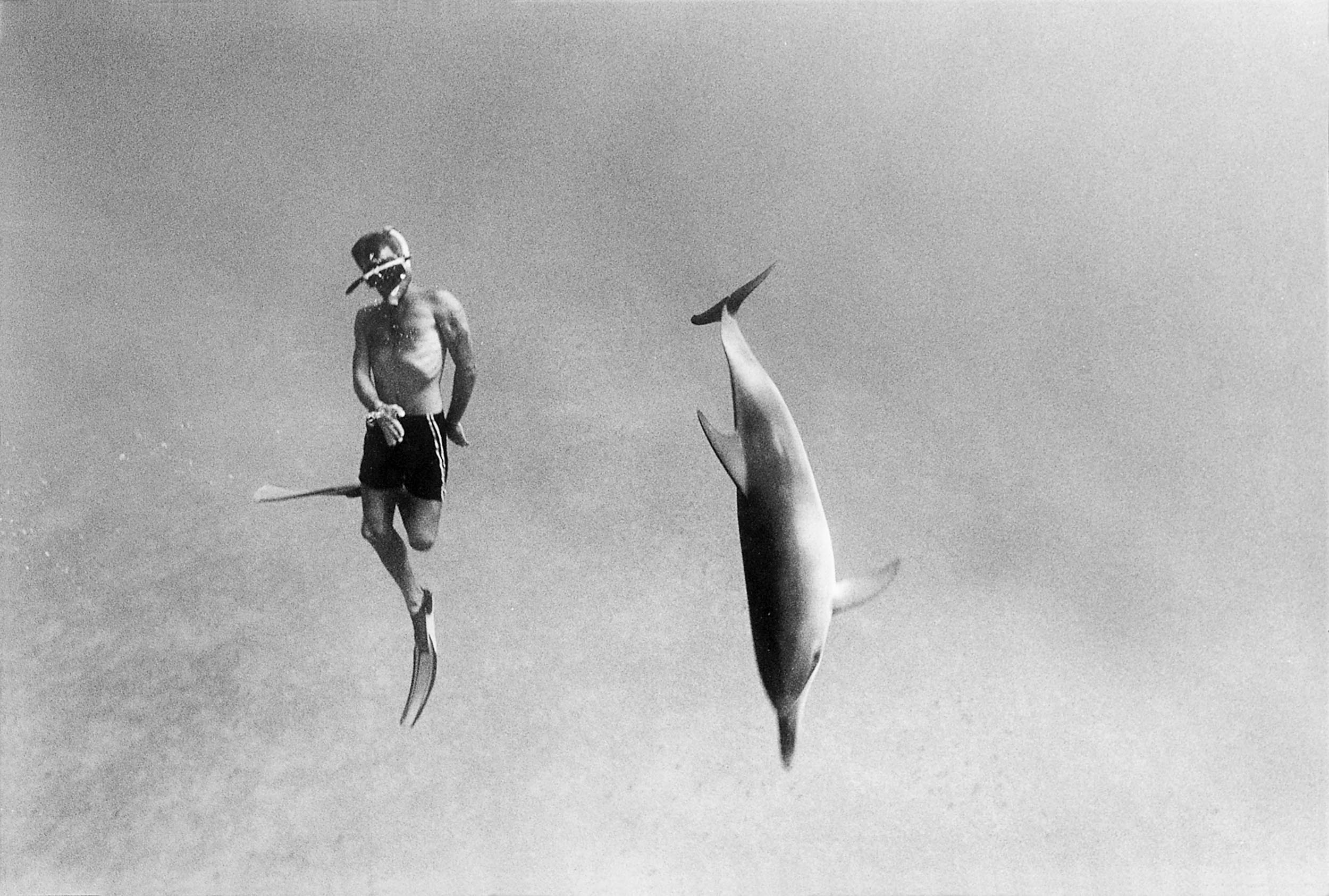 Barbara Alper- Photo of Dolphin and man swimming in the Bahamas