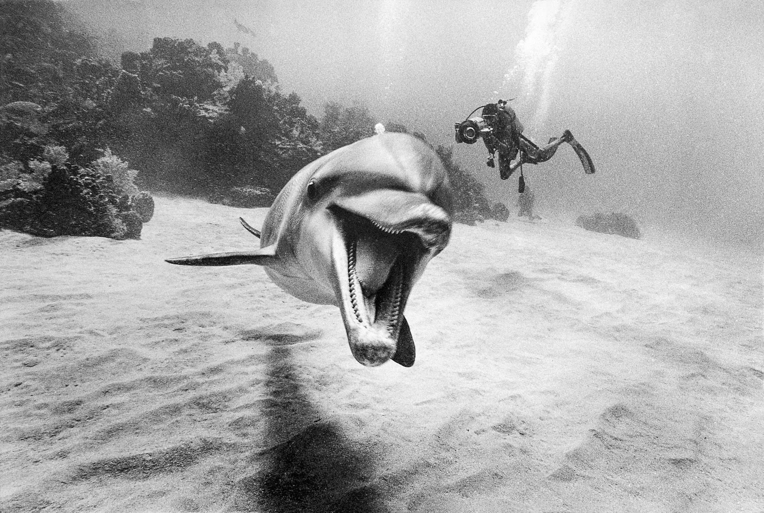 Barbara Alper- Photo of Dolphin smiling with divers in Roatan Honduras