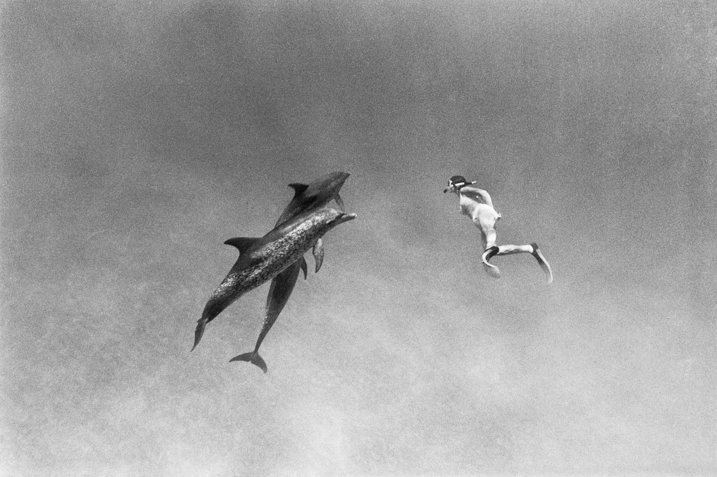 Barbara Alper- Photo of woman swimming with two dolphins in the Bahamas