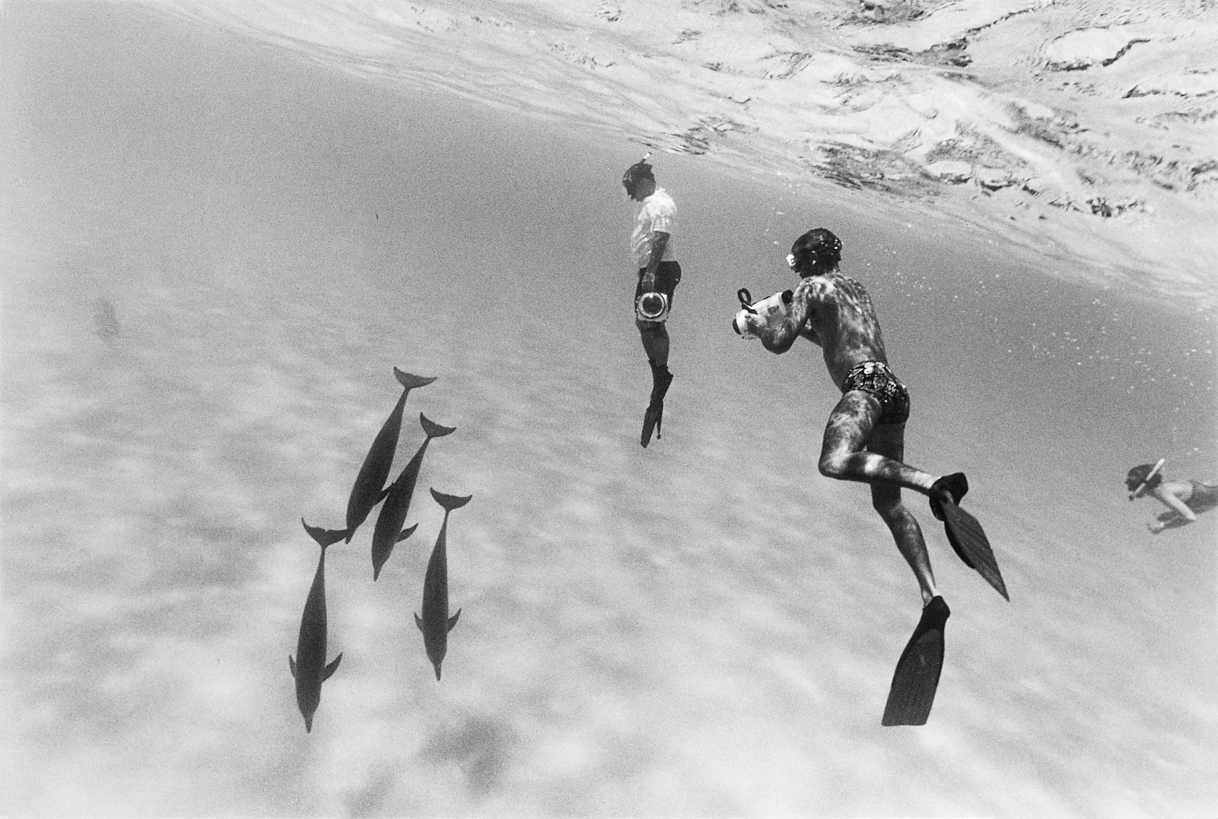Barbara Alper- Photo of people swimming with Dolphins in the Bahamas