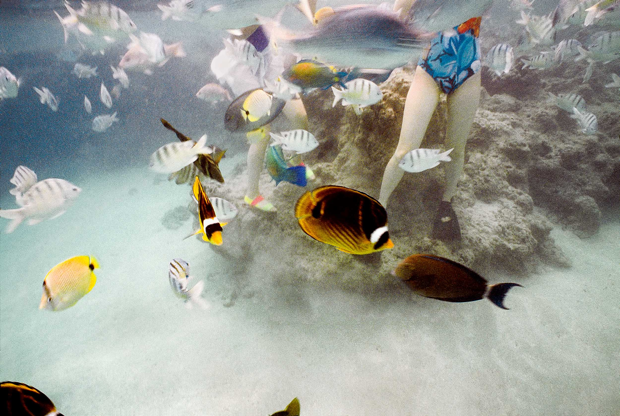 Barbara Alper- Photo of fish swimming around people at Hanauma Bay, Oahu Hawaii